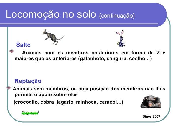 Locomoção no solo  (continuação) <ul><li>Salto  </li></ul><ul><li>Animais com os membros posteriores em forma de Z e maior...