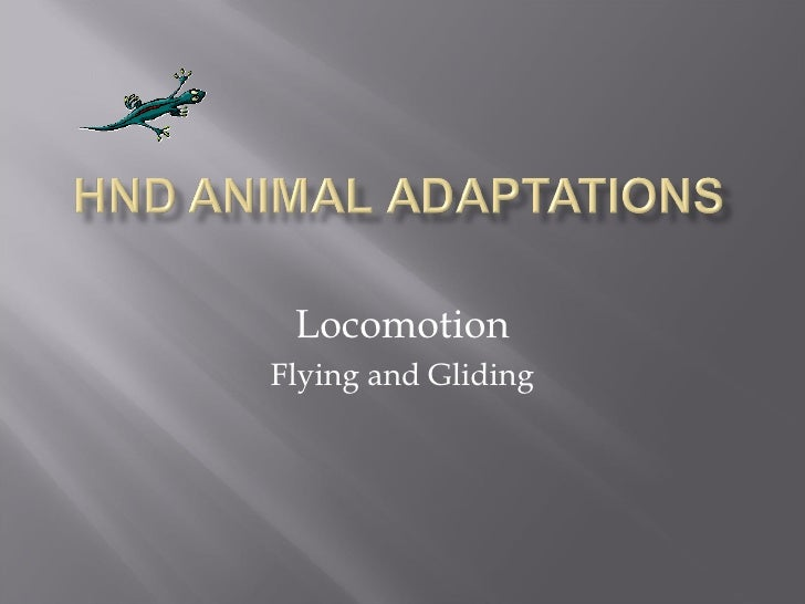 Locomotion Flying and Gliding