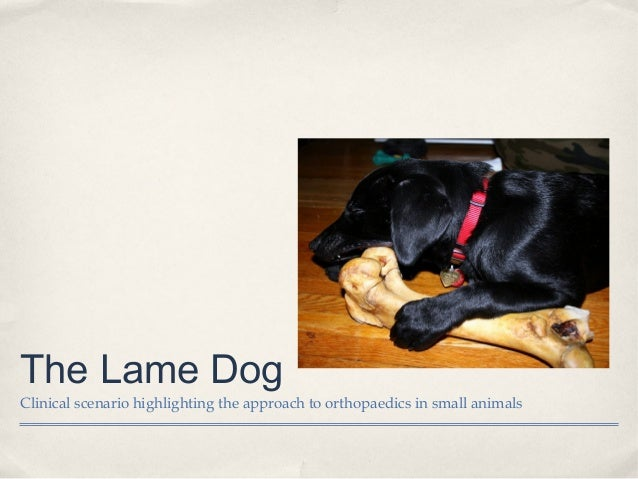 The Lame Dog Clinical scenario highlighting the approach to orthopaedics in small animals
