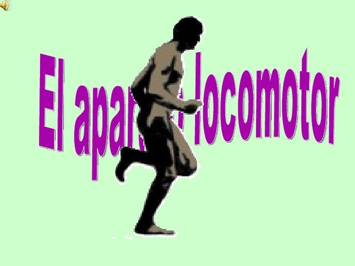 El conjunto de huesos y músculos del cuerpo   humano forman elaparato locomotor.