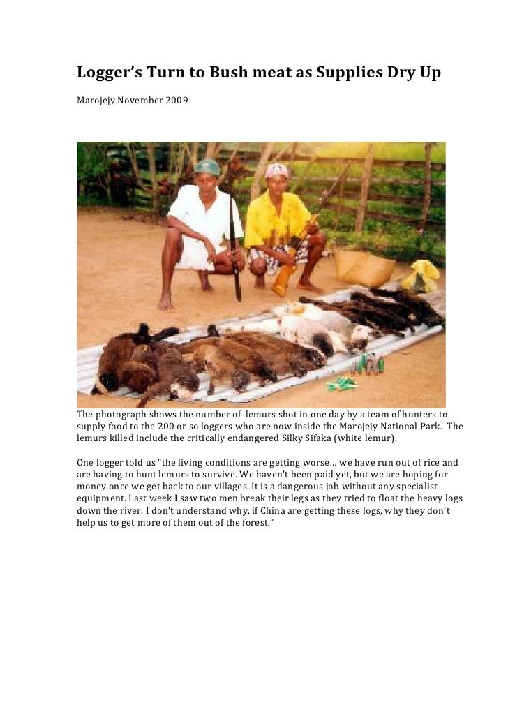 Logger's Turn to Bush meat as Supplies Dry UpMarojejy November 2009The photograph shows the number of lemurs shot in one d...