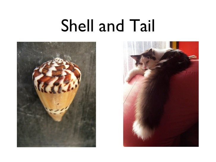 Shell and Tail