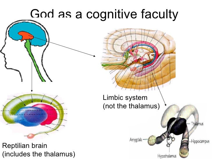 God as a cognitive faculty  • Triune brain                          Limbic system                          (not the thalam...