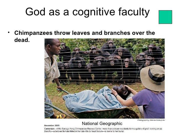 God as a cognitive faculty• Chimpanzees throw leaves and branches over the  dead.                        National Geograph...