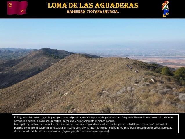El Raiguero sirve como lugar de paso para aves migratorias y otras especies de pequeño tamaño que residen en la zona como ...