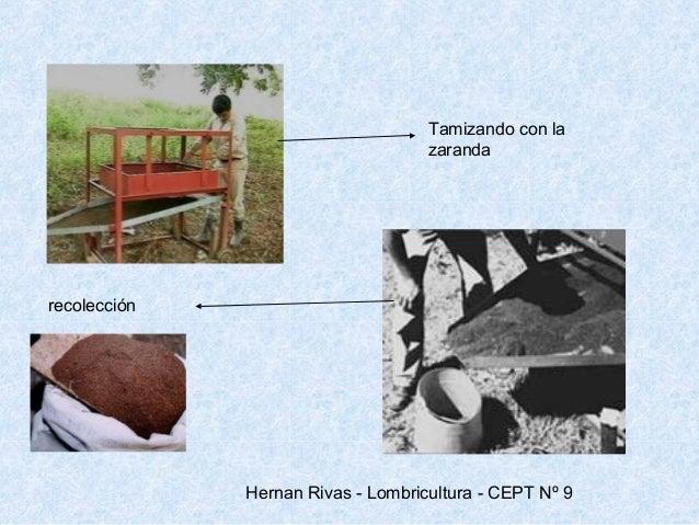 Los indicios del contagio por las lombrices a la persona