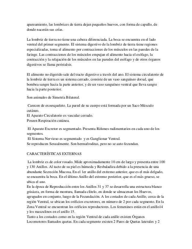 Informe de la Lombriz (Zoologia)