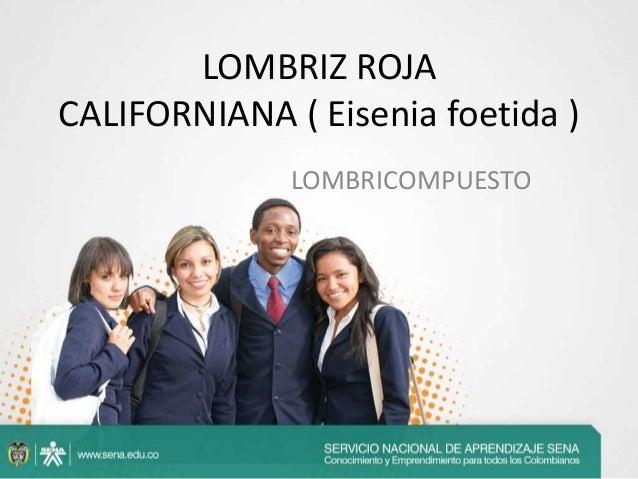 LOMBRIZ ROJA CALIFORNIANA ( Eisenia foetida ) LOMBRICOMPUESTO