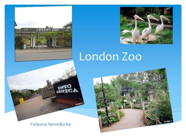 London ZooFetisova Veronika 6a