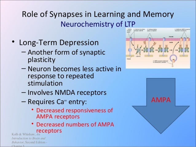 long term potentiation essay Free essay: this paper will  the neurobiological process of synaptic memory consolidation is thought to be long-term potentiation (ltp), which is the prolonged.