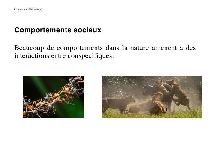 2   LongLastingMontpellier.nb     Comportements sociaux  Beaucoup de comportements dans la nature amenent a des interactio...