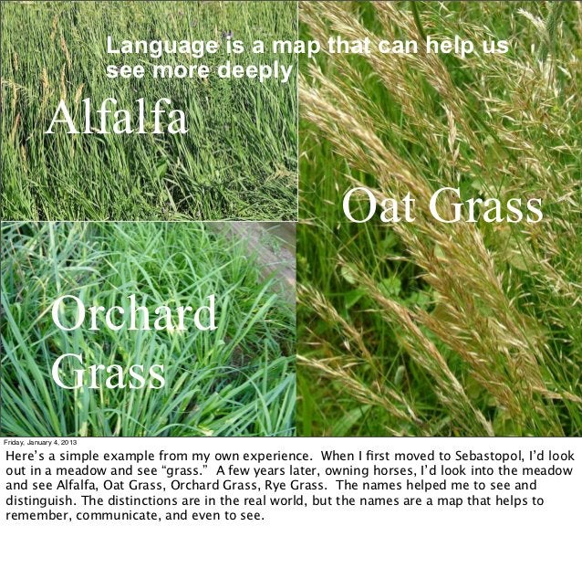 Language is a map that can help us                          see more deeply            Alfalfa                            ...