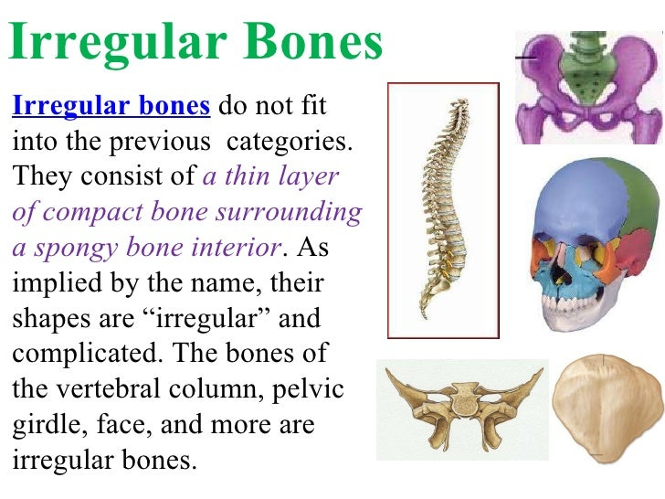 Long Short Flat Irregular Bones