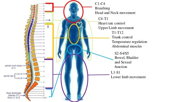 Spinal cord injuries and sexual dysfunction