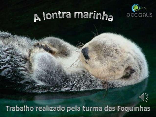 A lontra marinha