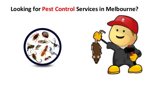 Looking for Pest Control Services in Melbourne?