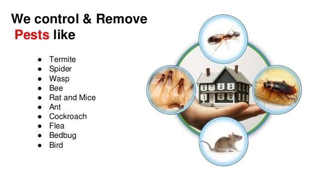 Looking for pest control services in melbourne Slide 3