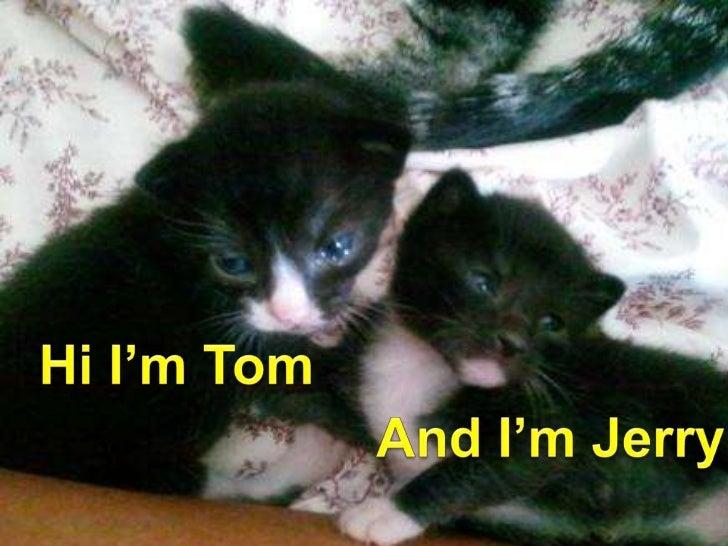 Hi I'm Tom<br />And I'm Jerry<br />