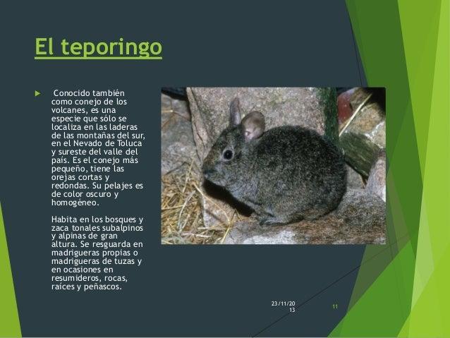 Los Animales De M U00e9xico En Peligro De Extinci U00f3n