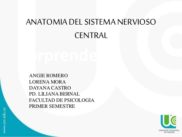 Sorprende ANATOMIADEL SISTEMANERVIOSO CENTRAL ANGIE ROMERO LORENA MORA DAYANA CASTRO PD. LILIANA BERNAL FACULTAD DE PSICOL...