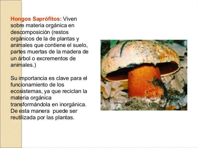 Introducci n a la micolog a - Tipos de hongos en la pared ...
