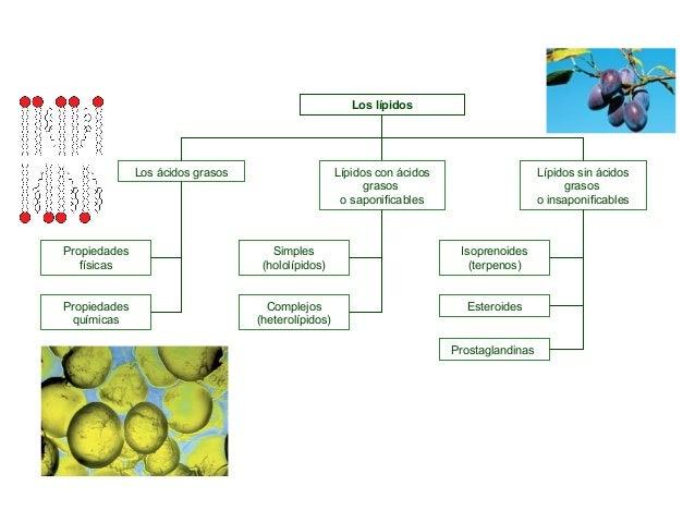terpenos esteroides y prostaglandinas