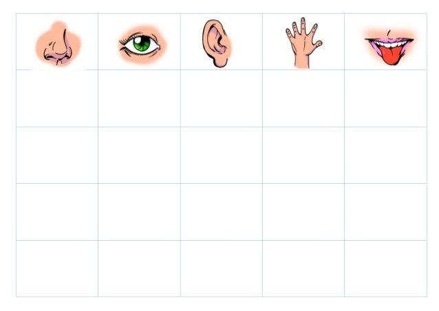 Los 5-sentidos