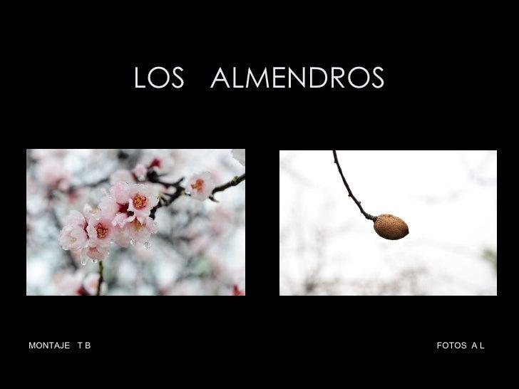 LOS  ALMENDROS MONTAJE  T B  FOTOS  A L
