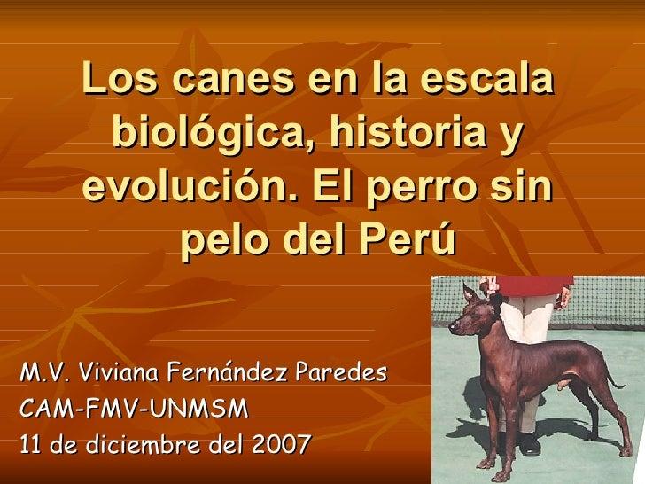 Los canes en la escala biológica, historia y evolución. El perro sin pelo del Perú M.V. Viviana Fernández Paredes CAM-FMV-...