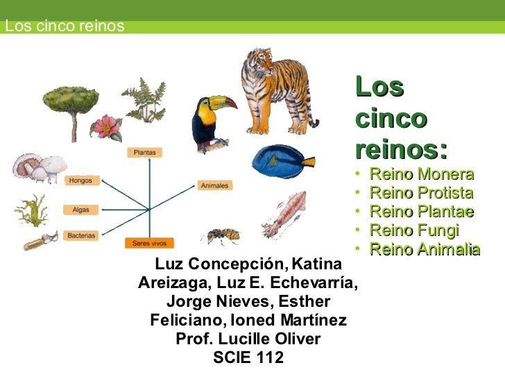 Los cinco reinos <ul><li>Los  </li></ul><ul><li>cinco  </li></ul><ul><li>reinos: </li></ul><ul><li>Reino Monera </li></ul>...