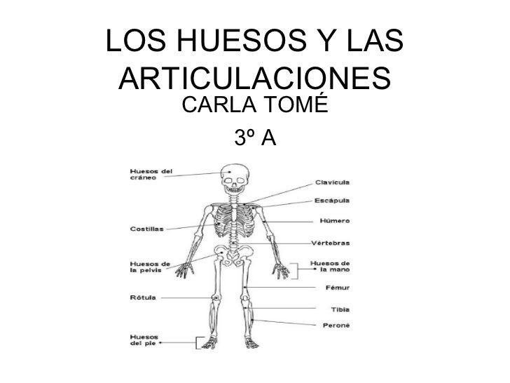 LOS HUESOS Y LAS ARTICULACIONES CARLA TOMÉ 3º A