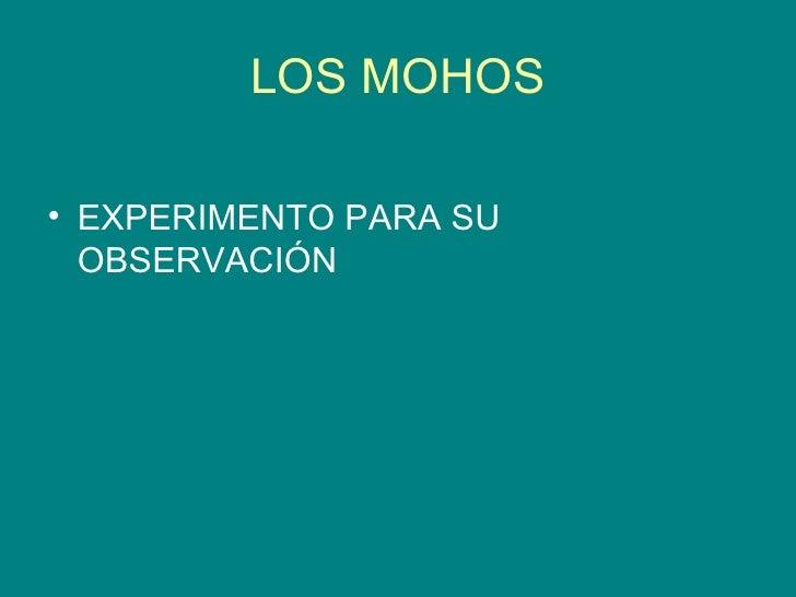 LOS MOHOS <ul><li>EXPERIMENTO PARA SU OBSERVACIÓN </li></ul>