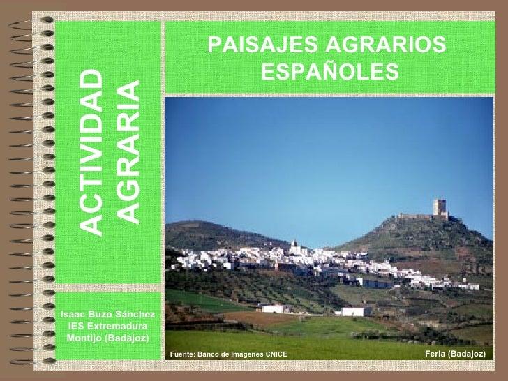 ACTIVIDAD AGRARIA Isaac Buzo Sánchez IES Extremadura Montijo (Badajoz) PAISAJES AGRARIOS  ESPAÑOLES Fuente: Banco de Imáge...