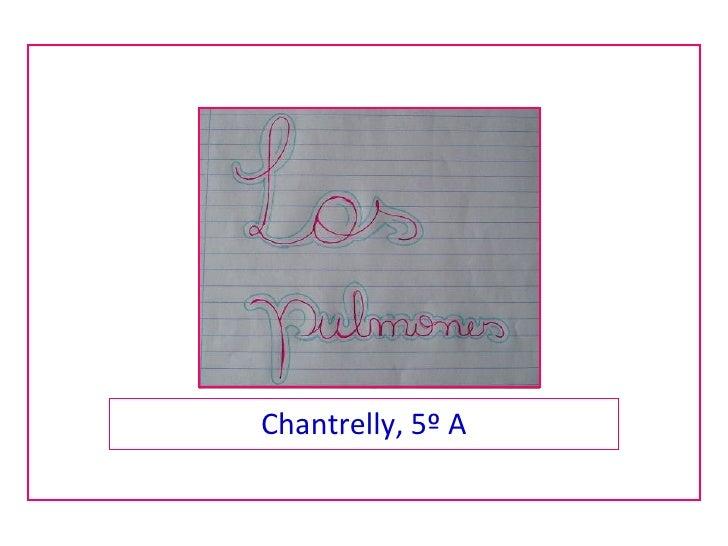 Chantrelly, 5º A