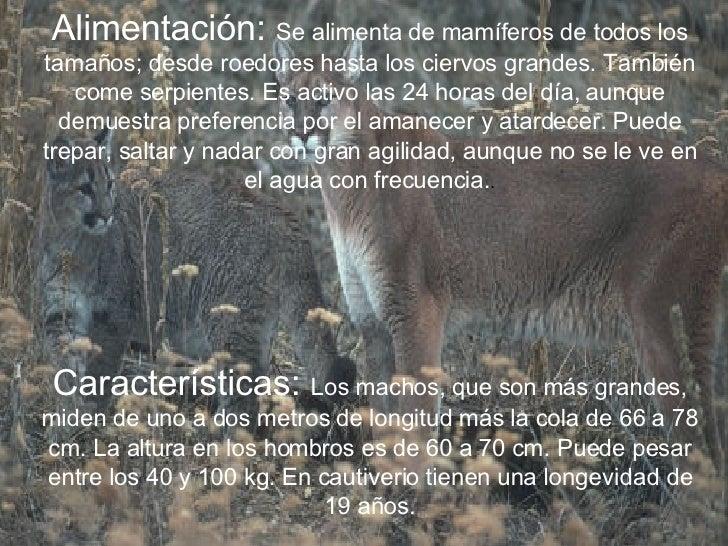 campeón Hacer satélite  Los Pumas