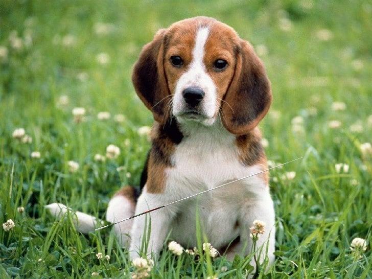 Los Diez Mandamientos de una mascota