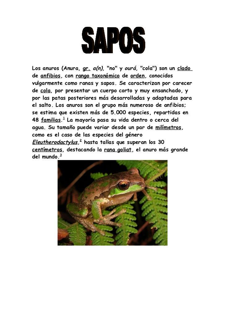 """Los anuros (Anura, gr. a(n), """"no"""" y ourá, """"cola"""") son un cladode anfibios, con rango taxonómico de orden, conocidosvulgarm..."""