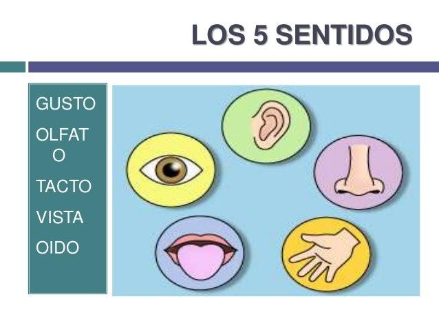 Image gallery los 5 sentidos for Mural de los 5 sentidos
