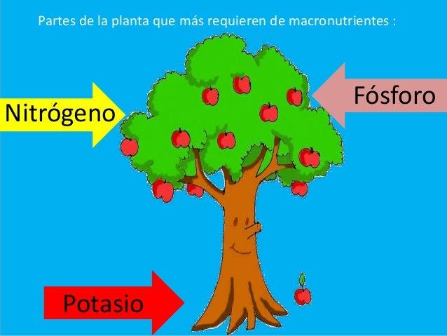 Los abonos for Potasio para plantas
