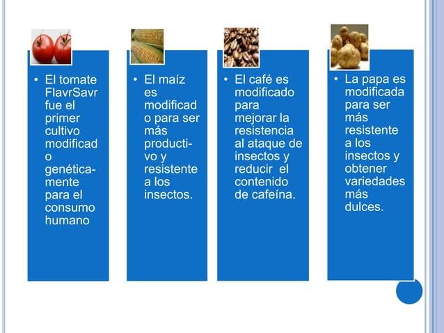 • El tomateFlavrSavrfue elprimercultivomodificadogenética-mentepara elconsumohumano• El maízesmodificado para sermásproduc...