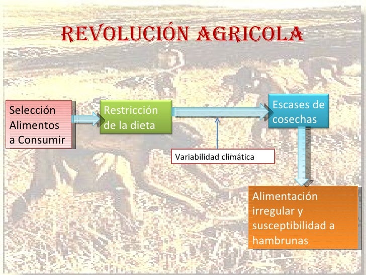 REVOLUCIÓN AGRICOLA Selección Alimentos a Consumir Variabilidad climática Alimentación irregular y susceptibilidad a hambr...