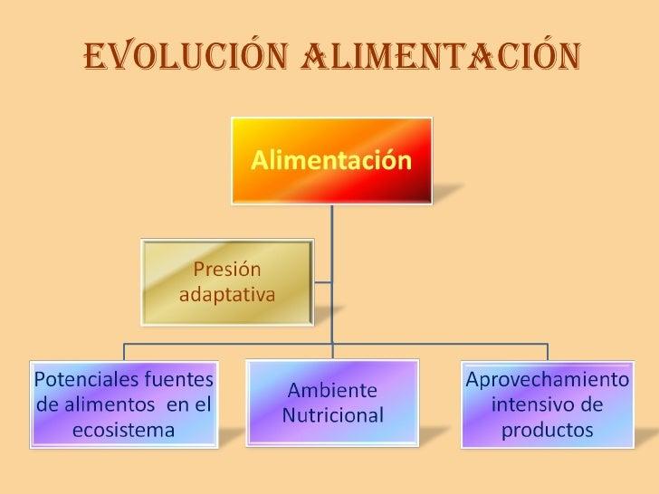 EVOLUCIÓN ALIMENTACIÓN