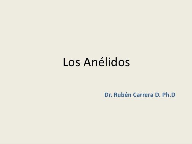 Los Anélidos       Dr. Rubén Carrera D. Ph.D