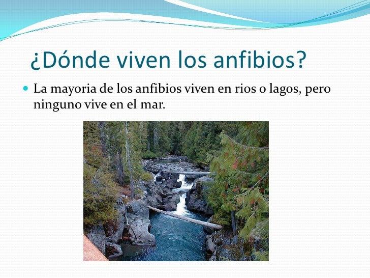 Los anfibios - Donde viven los acaros ...