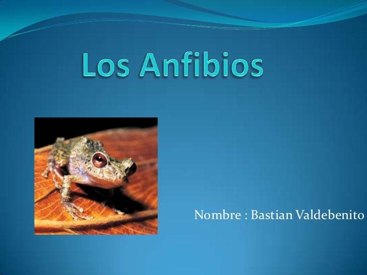 Los Anfibios<br />Nombre : Bastian Valdebenito<br />