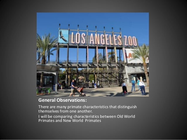 an observation of the chimpanzees at the los angeles zoo Going to the zoo in los angeles is a popular way for people to bond with each   nature as you observe various creatures of the earth in their natural habitat   chimpanzee's and other animals, so you won't want to miss those.