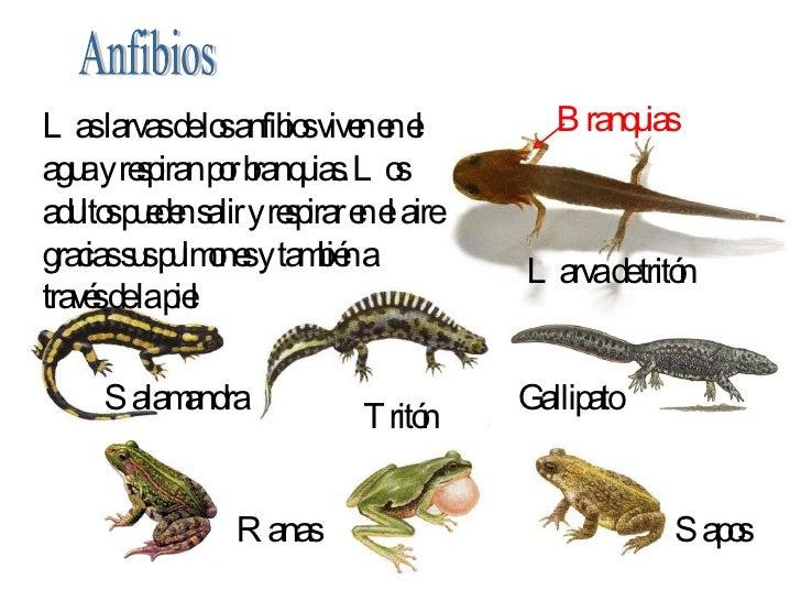 Metamorfosis de los anfibios yahoo dating 3