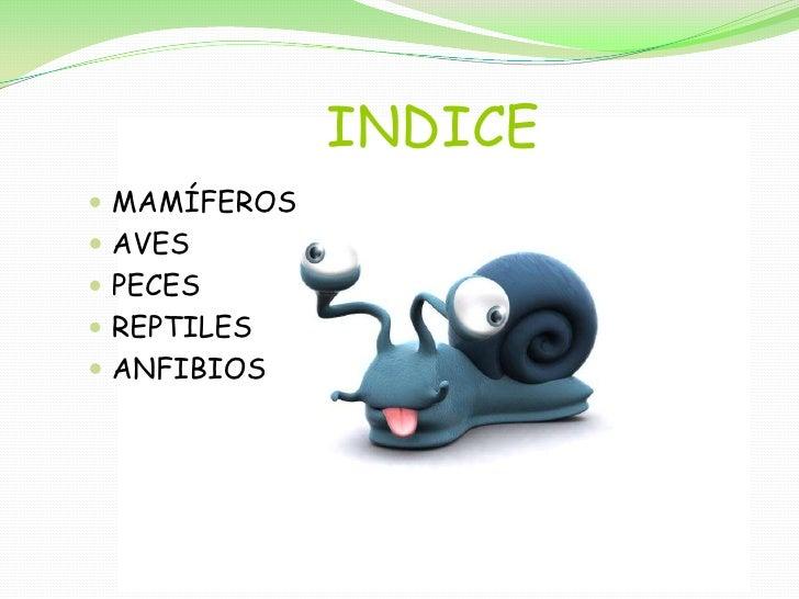 INDICE<br />MAMÍFEROS<br />AVES<br />PECES<br />REPTILES<br />ANFIBIOS<br />