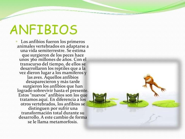 ANFIBIOS<br />Los anfibios fueron los primeros animales vertebrados en adaptarse a una vida semiterrestre. Se estima que s...