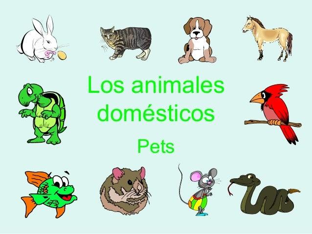 Los animales domésticos Pets